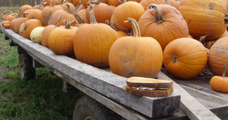 Pumpkin and Cream Cheese on wheat